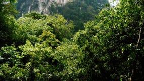 Fiume della giungla con la cascata archivi video