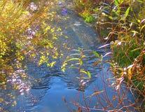 Fiume della montagna Fotografia Stock