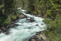 Fiume della montagna Acqua di ruscello veloce La Russia Altai Fotografia Stock Libera da Diritti