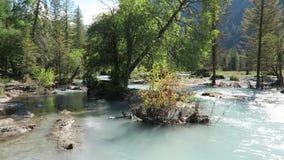 Fiume della montagna che attraversa il paesaggio delle montagne di Altai della foresta Fiume di Kucherla stock footage