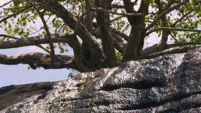 Fiume della montagna che circola sulle pietre sul paesaggio verde dell'albero Innaffi la corrente dal fiume roccioso che entra ne archivi video