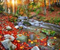 Fiume della montagna con le rapide e le cascate a tempo di tempo di autunno immagini stock