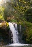 Fiume della montagna con una cascata nelle montagne dei Carpathians ucraini immagini stock libere da diritti