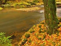 Fiume della montagna di autunno con le onde vaghe, pietre muscose verdi fresche Immagini Stock Libere da Diritti