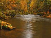 Fiume della montagna di autunno con le onde vaghe, pietre muscose verdi fresche Fotografie Stock