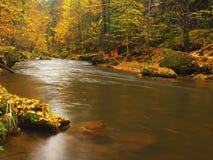 Fiume della montagna di autunno con le onde vaghe, pietre muscose verdi fresche, caduta variopinta Immagine Stock
