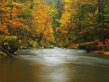 Fiume della montagna di autunno con le onde vaghe, pietre muscose verdi fresche, caduta variopinta Fotografie Stock