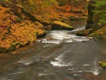 Fiume della montagna di autunno con le onde vaghe, pietre muscose verdi fresche, caduta variopinta Immagini Stock Libere da Diritti