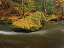Fiume della montagna di autunno con le onde vaghe, pietre muscose verdi fresche, caduta variopinta Fotografia Stock