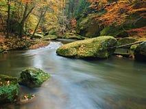 Fiume della montagna di autunno con le onde vaghe, pietre muscose verdi fresche, caduta variopinta Immagine Stock Libera da Diritti
