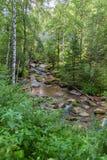 Fiume della montagna di Belokurikha vicino alla traccia di salute del terrenkur Fotografie Stock Libere da Diritti