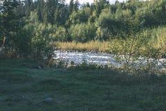 Fiume della montagna di estate Fiume di Bialka, Polonia - lo d'annata del film Fotografia Stock Libera da Diritti
