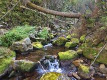 Fiume della montagna di Taiga Fotografie Stock Libere da Diritti