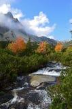 Fiume della montagna e paesaggio di autunno in alto Tatras, Slovacchia immagine stock