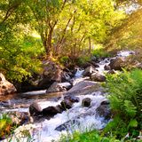 Fiume della montagna, foresta ed alba luminosa Immagini Stock Libere da Diritti