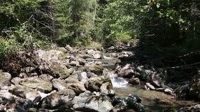 Fiume della montagna moto dell'acqua vicino alle pietre stock footage