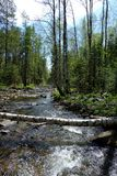 Fiume della montagna nella foresta fotografie stock