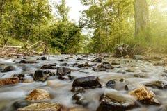 Fiume della montagna nella foresta Fotografie Stock Libere da Diritti