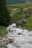 Fiume della montagna nella foresta di estate Fotografie Stock Libere da Diritti