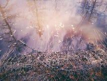 Fiume della primavera Fotografia Stock