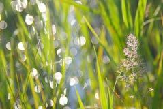 Fiume delle erbe dell'orecchio immagini stock