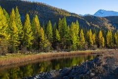 Fiume delle montagne di Altai, Russia di Katun nave Fotografie Stock