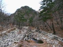 Fiume delle montagne nel parco nazionale di Seoraksan Immagini Stock Libere da Diritti