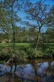 Fiume Derwent vicino a verde della chiave, Scarborough, North Yorkshire fotografie stock libere da diritti