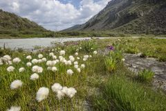 Fiume di Akkem Montagna di Altai La Russia Fotografia Stock Libera da Diritti