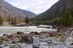Fiume di Argut Paesaggio di Altai della montagna La Russia Fotografia Stock Libera da Diritti