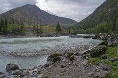 Fiume di Argut prima di sfociare nel fiume di Katun Montagne di Altai Fotografia Stock