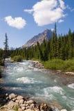 Fiume di Astoria in Jasper National Park Immagine Stock