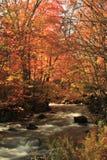 Fiume di autunno Immagine Stock