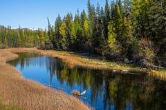 Fiume di Chuya un tributario giusto del fiume di Katun, Repubblica di Altai Immagini Stock