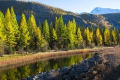 Fiume di Chuya un tributario giusto del fiume di Katun, Repubblica di Altai Immagine Stock Libera da Diritti