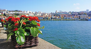 Fiume di Douro Fotografia Stock