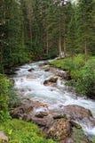 Fiume di Gerlos che attraversa la foresta del pino in alpi europee Fotografia Stock Libera da Diritti
