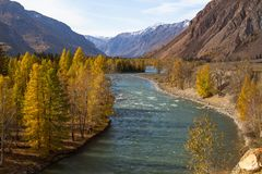 Fiume di Katun all'autunno nella Repubblica di Altai Fotografia Stock