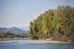 Fiume di Katun Paesaggio di Altai della montagna Fotografie Stock Libere da Diritti
