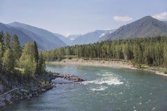 Fiume di Katun Paesaggio di Altai della montagna Fotografia Stock Libera da Diritti