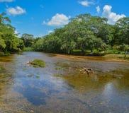 Fiume di Macal che attraversa San Ignazio, Belize fotografie stock