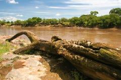 Fiume di Mara, Kenia fotografia stock libera da diritti