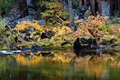 Fiume di Merced in autunno Immagine Stock
