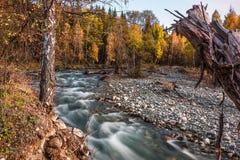 Fiume di Multa nella Repubblica di Altai della montagna, Russia Fotografie Stock Libere da Diritti