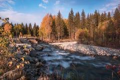 Fiume di Multa nella Repubblica di Altai della montagna, Russia Immagine Stock Libera da Diritti