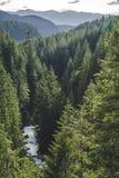 Fiume di Nooksack in Forest Trees senza fine fotografia stock libera da diritti