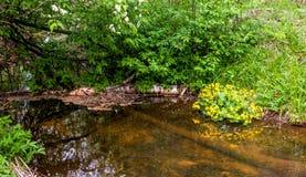 Fiume di Pekhorka nel ` dell'isola delle alci del ` della riserva La Russia Federazione Russa immagini stock libere da diritti