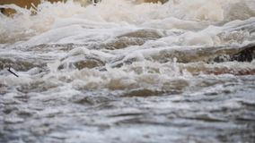 Fiume di ribollimento della montagna wildlife Un fiume infuriantesi della montagna in primavera stock footage