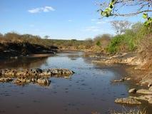 Fiume di Serengeti Immagine Stock