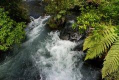 Fiume di Tarawera, Nuova Zelanda Fotografia Stock